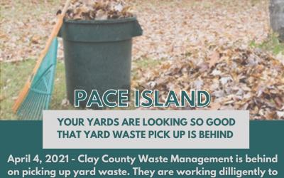 Yard Waste Behind